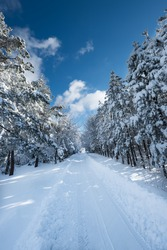 Beautiful winter landscape with road and trees covered with snow. Povlen mountain. East Europe. Serbia.