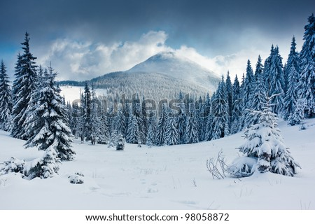 Beautiful winter landscape with snow covered trees #98058872
