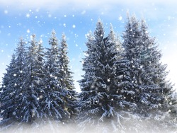 Beautiful winter landscape with snow covered trees .Christmas card