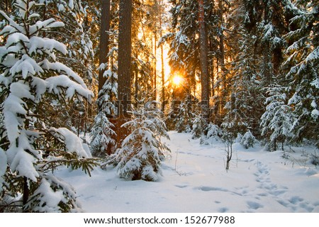 Stock Photo beautiful winter landscape with sunset in the forest