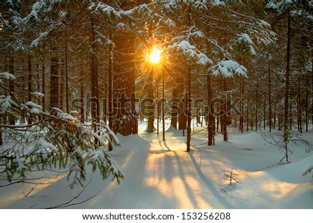 beautiful winter landscape with the forest and the sun