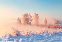Beautiful winter morning landscape. Tall frosty trees covered with frost on riverside. Pink fog over snowy meadow at sunrise. Christmas or New Yaer holiday background. Sunny xmas nature.