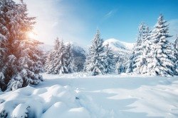 Beautiful winter nature landscape, amazing mountain view. Scenic image of woodland. Frosty day on ski resort. Location Carpathian, Ukraine. Superb winter wallpapers. Explore the beauty of earth.