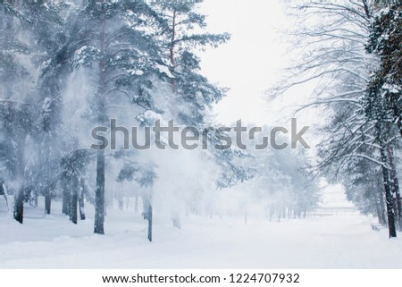 Beautiful winter park with trees in the snow and blizzard and blizzard #1224707932