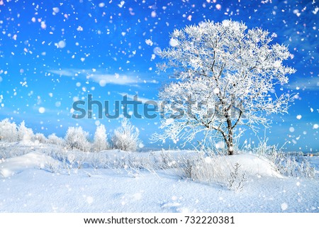 beautiful winter rural landscape with forest and blue sky. wintry frosty sunny day. snowy winterly landscape #732220381