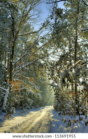 Beautiful winter sunset in the forest covered with snow