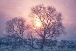 Beautiful winter sunset on Christmas