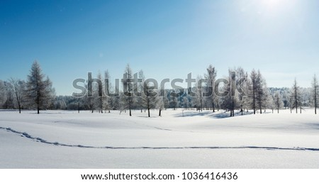 Beautiful wintry landscape from Finland. Sunny scenery, wallpaper. Snowy ground with footprints in the snow. #1036416436