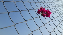 Beautiful wire mesh pattern in blue sky background