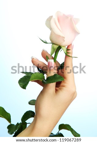 Beautiful woman hand with rose, on blue background