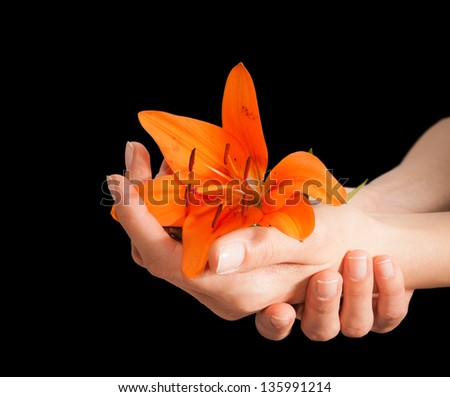 Beautiful woman hands and lily flower over white background
