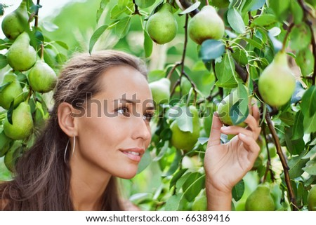 Beautiful woman picking the pear in the garden
