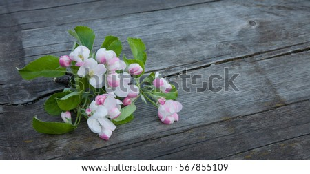Beautiful wood background with Apple flowers lying on the old brown wooden texture. Springtime. Amazing Web banner Wide Horizontal Image With Copy Space #567855109