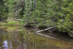 Beautiful wooded riverbank in spring