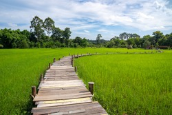 Beautiful wooden bridge walkway on the rice filled with blue sky, Nakhon Nayok province, Thailand