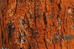beautiful woody background texture natural decorative element  photo