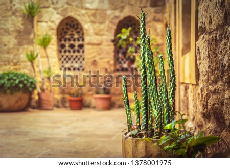 Beautiful yard of a church with fresh cactus in pot, old christian monastery, tourist attraction, Lebanon ancient architecture