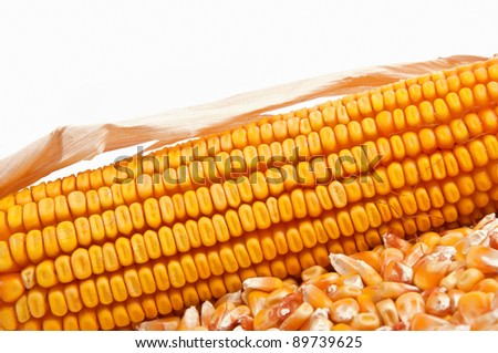 Beautiful yellow ear of corn over a white background