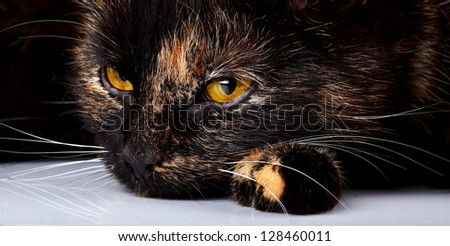 Beautiful yellow eyes of a lying cat. Sad cat.