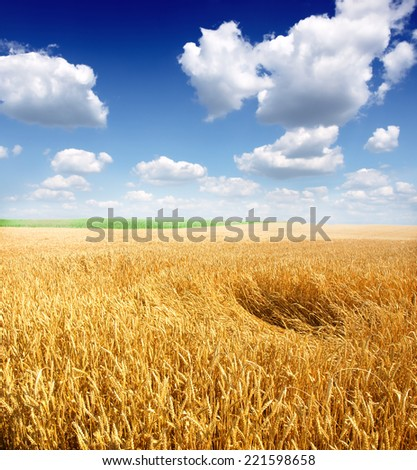Beautiful yellow field and clouds sky #221598658