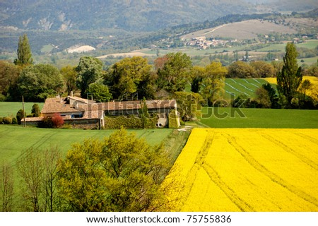 Beautiful yellow field of colza near an old farm in a typical landscape of south of France, Drome, Saou