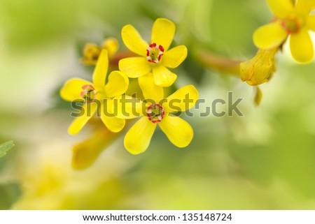 beautiful yellow flower in nature. macro - stock photo