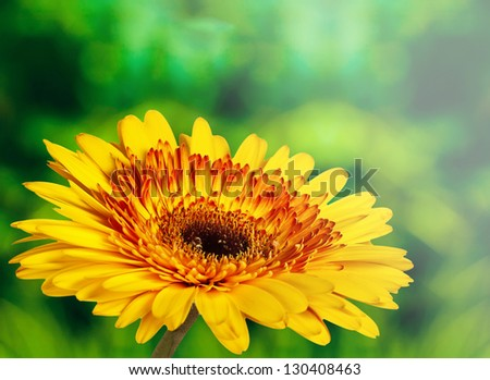 beautiful yellow flower on green abstract background