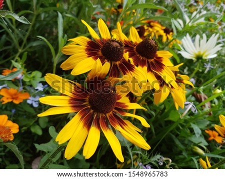 Beautiful yellow flowers in the middle of the garden. #1548965783
