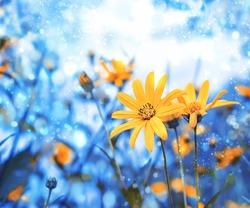 Beautiful yellow flowers Rudbeckia laciniata. summer blossom season nature concept. dreamy magic artistic image. copy space
