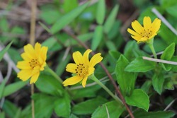 Beautiful yellow flowers with fresh green leaves