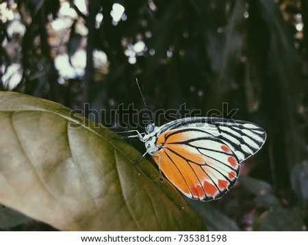 Beautiful yellow orange and white butterfly on leafs of trees on blurred dark trees #735381598