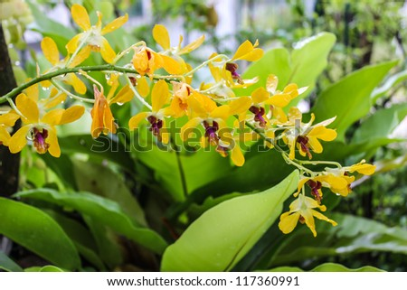 Beautiful yellow orchid in garden