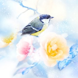 Beautiful yellow pink roses and tit bird in the snow and frost. Artistic winter natural image. Winter spring season. Square format.