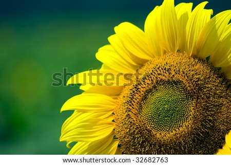 Beautiful, yellow sunflower colored background.