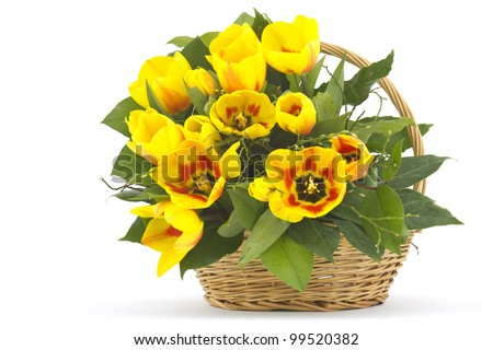 Beautiful yellow tulips in a basket on a white background