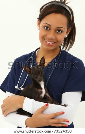 Beautiful Young Adult Veterinarian with Chihuahua over white Background.