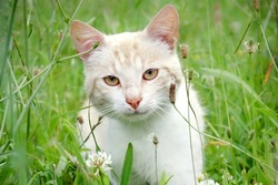 Beautiful young cat in the grass - Young cat hides in the grass