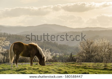 Stock Photo Beautiful young horse grazing on a green meadow with blossoming trees in a sunny day in spring.
