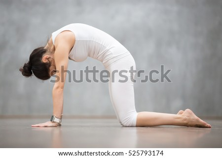 """Beautiful young woman with tattoo on her foot meaning """"Wild cat"""" working out against grey wall, doing yoga or pilates exercise. Cat, Marjaryasana, asana paired with Cow Pose on the inhale. Full length"""