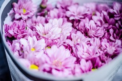 Beautifulflower in the Thailand market
