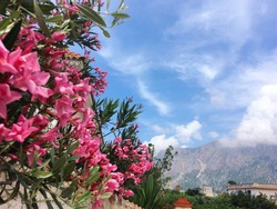 Beautifulflowers and mountains
