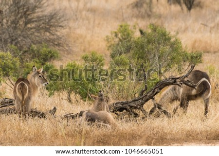 Beautifull animal pic in Kruger National Park