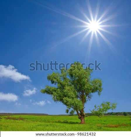 beautifull green tree in a steppe by a sunny day