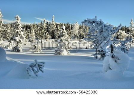 beautifull lanscape on winter time