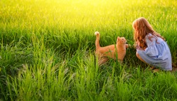 Beautifull red hair little girl sitting and looking at a ginger cat.