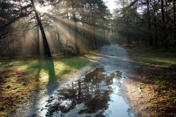 beautifull Sun rays and beautifull reflection in the pond
