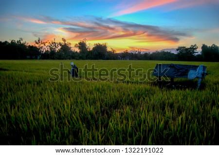 beautifull sun rise at paddy field #1322191022