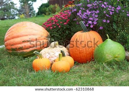 Beautifully arranged pumpkins, gourds, Chrysanthemums for fall holidays
