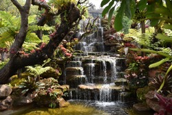 Beautifully arranged tree garden There are waterfalls and various types of plants looking beautiful.