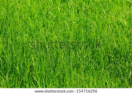 beautifully cut field of summer grass!